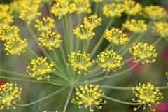 Fleurs sensibles d'été Photo stock