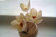 Fleurs sensibles de jasmin Photographie stock libre de droits