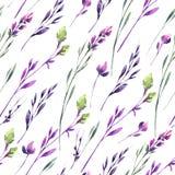 Fleurs sensibles et plantes de modèle sans couture Illustration d'aquarelle d'été et de ressort Texture botanique dans la violett Images stock