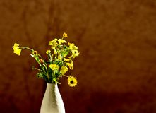 Fleurs simples de source Photographie stock