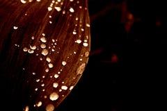 Fleurs sous la pluie images stock
