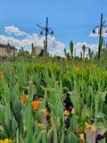 Fleurs sous le ciel image stock