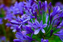 Fleurs spectaculaires et belles dans le jardin botanique du ³ n de Gijà le 1er août 2018 photographie stock libre de droits