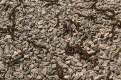 Fleurs stamin?es tomb?es de noix sur une couche de gravier l?ger au soleil ?clairant image libre de droits