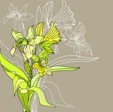 Fleurs stylisées de narcisse Image libre de droits