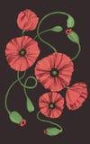 Fleurs stylisées de pavot Image stock