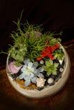 Fleurs succulentes dans un bol en verre image stock