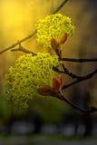 Fleurs sur des brindilles dans la lumière de coucher du soleil Photos libres de droits
