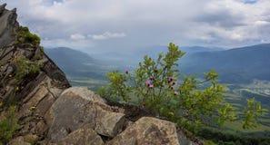 Fleurs sur des roches Image libre de droits