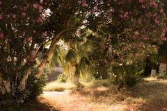 Fleurs sur l'arbre Photographie stock libre de droits