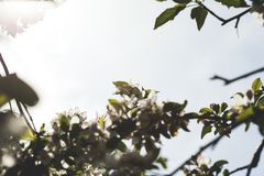 Fleurs sur l'arbre photo stock