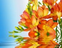 Fleurs sur l'eau Photos stock