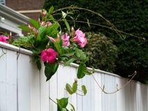 Fleurs sur la barrière Photographie stock
