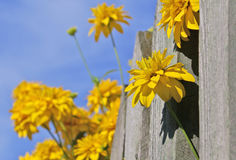 Fleurs sur la barrière Photographie stock libre de droits