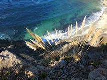 Fleurs sur la falaise de bord de la mer Images libres de droits