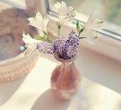 Fleurs sur la fenêtre Photos libres de droits