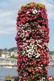 Fleurs sur la luzerne de lac Photographie stock