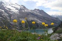 Fleurs sur la montagne, montagnes de neige Images libres de droits
