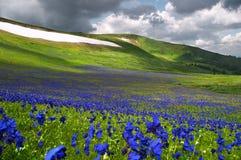 Fleurs sur la neige Photo stock
