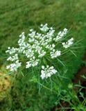 Fleurs sur la pelouse verte Photo libre de droits