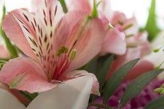 Fleurs sur la photo de fenêtre Photographie stock libre de droits