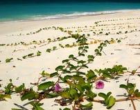 Fleurs sur la plage Images libres de droits
