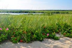 Fleurs sur la plage Image libre de droits