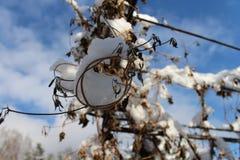Fleurs sur la voûte sous la première neige photographie stock libre de droits