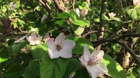 Fleurs sur le balancement d'arbre dans le vent sur la nature banque de vidéos