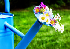 Fleurs sur le bidon d'arrosage Image stock