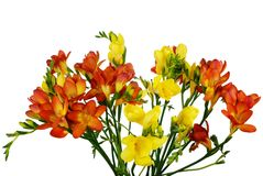 Fleurs sur le blanc Photo stock