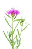 Fleurs sur le blanc Photographie stock libre de droits