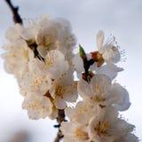 Fleurs sur le branchement photos stock