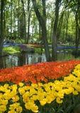 Fleurs sur le côté de fleuve en Hollande Photo stock