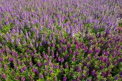 Fleurs sur le champ Image stock