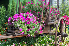 Fleurs sur le chariot Photos libres de droits