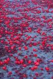 Fleurs sur le chemin Image libre de droits