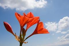 Fleurs sur le ciel Photos libres de droits