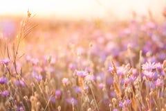 Fleurs sur le coucher du soleil Image libre de droits