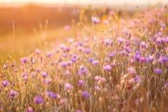 Fleurs sur le coucher du soleil Images stock