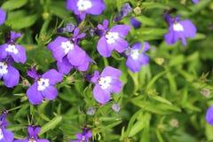 Fleurs sur le criffel Image stock