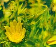 Fleurs sur le fond abstrait Image libre de droits
