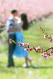 Fleurs sur le fond affectueux de couples Photographie stock libre de droits