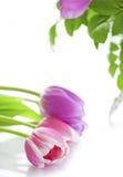 Fleurs sur le fond blanc Photo libre de droits