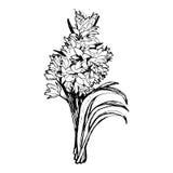 Fleurs sur le fond blanc Image stock