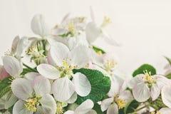 Fleurs sur le fond blanc mou images stock