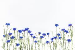 Fleurs sur le fond blanc Vue supérieure, configuration plate Photo stock