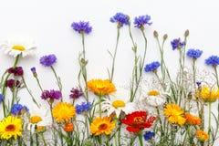 Fleurs sur le fond blanc Vue supérieure, configuration plate Images libres de droits