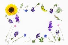 Fleurs sur le fond blanc Vue supérieure, configuration plate Photographie stock