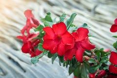 Fleurs sur le fond brouillé de nature photographie stock libre de droits